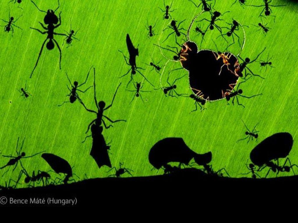 Faire Fuir Les Fourmis comment faire fuir les fourmis ?